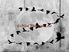 Industrial Black Bird Crow Moon Flight Matted Picture Art Wall Home Decor A746