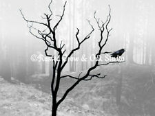 Black White Crow Bird Tree Fog Mist Forest Landscape Matted Picture Print A118