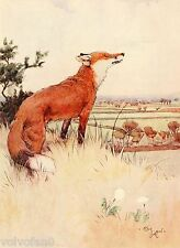 Cecil Aldin Dog Print White Ear and Peter 1912 12/15