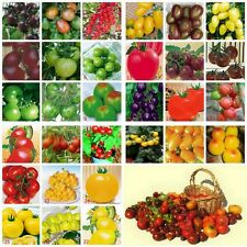 Tomato Seed. Pick-n-Mix. Select 3, 5, 8 or 10 Varieties.10 Seeds of Each Variety