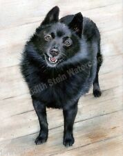 Schipperke Shipperke Dog Art Print of Watercolor Painting Judith Stein DUSTY