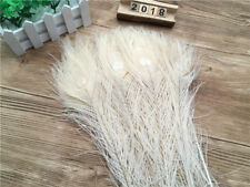 10-500pcs beautiful White peacock eyes feathers 10-12 inch / 25-30 cm DIY HOT