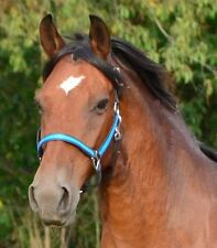 COB Size ANY 2 COLOR COMBO HALTER Beta Biothane Halter Horse Headcollar