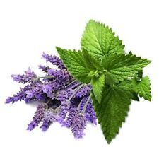 NATURAL HAYFEVER TREATMENT USING PURE ESSENTIAL OILS