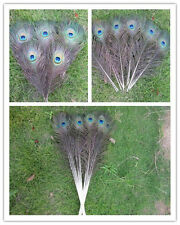 Wholesale! Beautiful peacock feather eye 10-32 inch 25-80 cm/10-100pcs