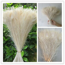 Wholesale! Beautiful peacock feather eye 10-32 inch 25-80 cm free shipping