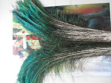 Wholesale! beautiful peacock feathers symmetrically 60-70 cm 24-28 inches long