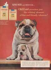 1954 Old Gold Cigarettes: Bull Dogs Print Ad (22830)