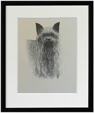 Yorkshire Terrier: Print of 1930's Drawing by C. Francis Wardle. 3 frame styles
