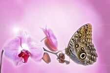Butterfly Orchid - Premium Fragrance Oil