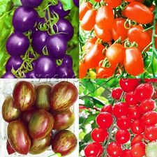 Tomato Seeds Vegetable Seeds Heirloom Tomato Green Organic Fruit Healthy Food