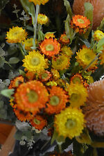AUSTRALIAN STRAW FLOWERS, HELICHRYSUMS, ARTIFICIAL REAL LOOK STEMS , DRIED LOOK