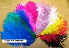 "Ostrich Feathers Pack of 10 (Approx 8""-11"" Long) Beautiful colours FREE POSTAGE"