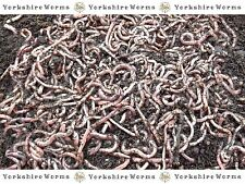 SMALL Dendrobaena Worms Fishing Live Fresh Reptile Food, (25g to 1000g)