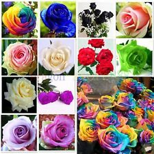 50x Color rare Rose Seed Colorful Seeds For Your Lover Petal Plants Home Garden