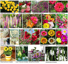 48 kinds Garden flower seeds bank potted Bonsai rare exotic plant free shipping