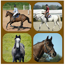 HORSE / PONY - PERSONALISED FUN COASTERS WITH YOUR PHOTOS - GIFT/ XMAS / B/DAY