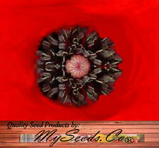 10,000 x RED Poppy Flower Seeds - Papaver rhoeas ~ Heavy Bloomers + FREE Gift