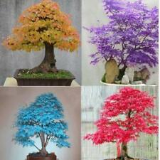 Potted Plant Seed 20 PCS Maple Tree Seeds Bonsai Home & Garden b69
