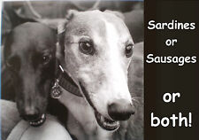 Please make a donation to treat a Greyhound or Lurcher at Tia Rescue.