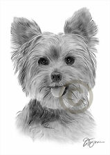 YORKSHIRE TERRIER art pencil drawing print A3 / A4 sizes signed dog artwork