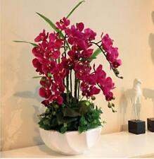 Phalaenopsis Orchid Seeds Flower Seeds Indoor Bonsai Orchids 100pcs