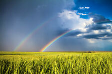 Kansas Landscape Photography Print - Picture of Double Rainbow Over Spring Wheat