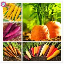100 pcs/bag Rare Rainbow Carrot seeds Colourful Non-GMO Organic Fruit Vegetable