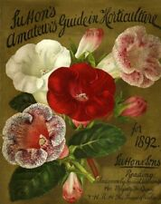 Suttons Vintage Seed Cover Picture Art Print Poster A4 A3 A2 A1