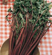 """Endive - """"Catalogna Garnet Stem""""  Beautiful Color!!! Wow what a Stand-out!!!!"""