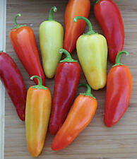 Santa Fe Grande Pepper -Excellent Yields!!!! Fun to Grow!! FREE SHIPPING!!!!!!