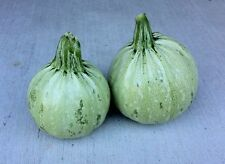 Summer Squash Seeds - 'Round Zucchini' Unusual!!! TASTY!!!! FREE SHIPPING!!!!!