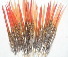 Wholesale, 10-100pcs beautiful Natural pheasant tail feathers, 20-25 cm