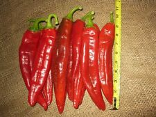 Big Jim Legacy Pepper - 8 to 10 inches - mild to medium variety - Free Shipping