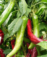 Hatch Chile Pepper Seeds - Assorted Mix! Hot & Mild!! Large Peppers! Free Ship!