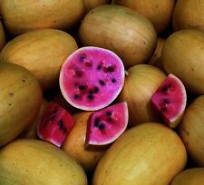 Watermelon - Golden Midget Heirloom (Citrullus lanatus) Melon Fruit Garden Seeds