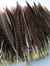 Wholesale high quality natural golden pheasant feathers 15-20cm / 6-8inch