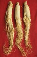 whole Panax Korean White Ginseng Roots,Top SEX Herbal,CHINESE Bai Ren Shen Weiß