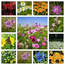 Wildflower Meadow Seed Mix Instant Sunshine 45+Wild Flowers 7 grass UK Seed Firm
