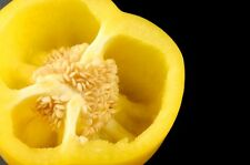 Sunbright Bell Pepper - A SWEET Colorful -  Golden Pepper!! FREE SHIPPING!!!!!