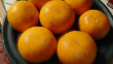 Tangerine (HomeGrown) Seeds.The Sweetest & Juciest Fruit Ever!!!! Free Shipping!