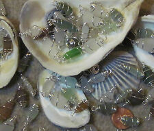 Lot of 10 Caribbean Sea Glass Earring Dangles/ Bracelet Charms- Choice of Colors
