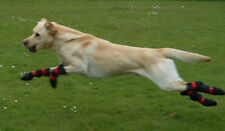 Dog boots for CDRM, FCE, nerve damage, stroke, dragging paws. Pro-Active Paws