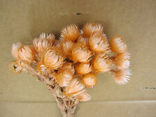 Dried Everlasting Natural Flowers Bunch Bouquet Weddings Craft Home Decoration