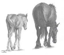 MARE & FOAL(2) LE art drawing prints available 2 sizes A4/A3 & greetings Card