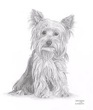 YORKSHIRE TERRIER Yorkie dog LE art drawing print 2 sizes A4/A3 & card Available