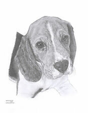 BEAGLE (2) dog Limited Edition art drawing prints 2 sizes A4/A3 & Card Available