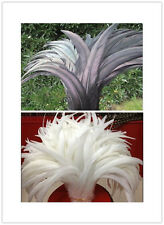 Wholesale 10-100 pcs black / white rooster tail feathers 10-16 inche / 25-40cm