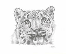 SNOW LEOPARD Limited Edition art drawing prints 2 sizes A4/A3 & card Available