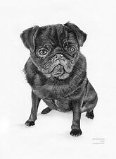 BLACK PUG dog Limited Edit art drawing prints 2 sizes A4/A3 & Card available